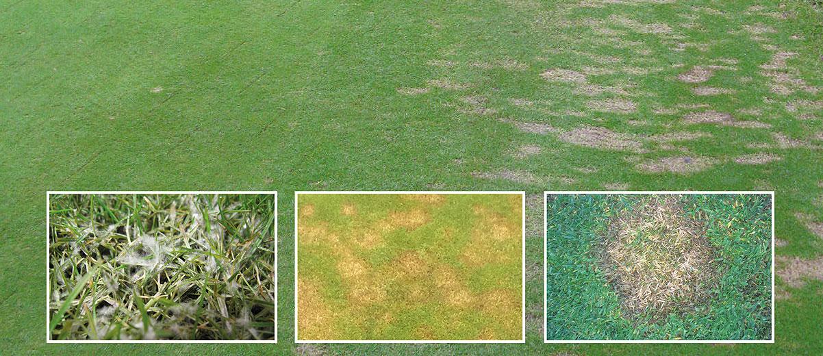 Non-Pesticidal Disease Management Weather
